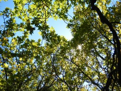 trees n sky